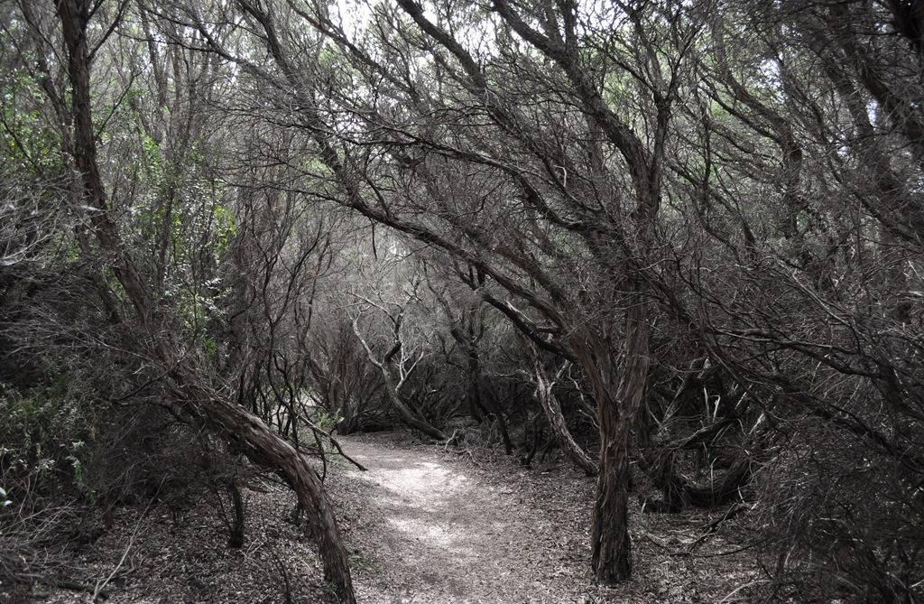 spooky-trees-1143476