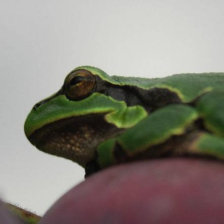 Troy's Crock Pot: Putting your frog princes to work