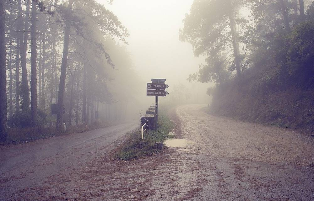 A Sign post stands in a foggy forest between two roads