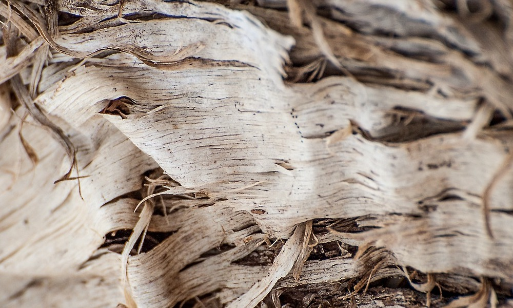 wood shavings with prominent woodgrain