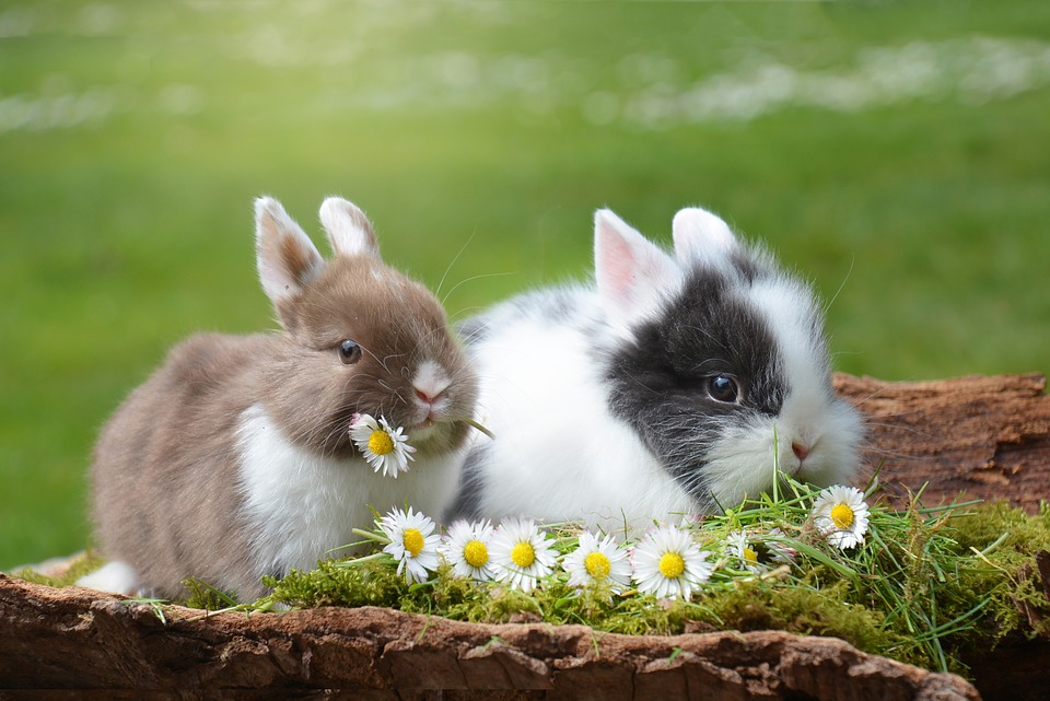 Two small rabbits eat flowers against a green background.