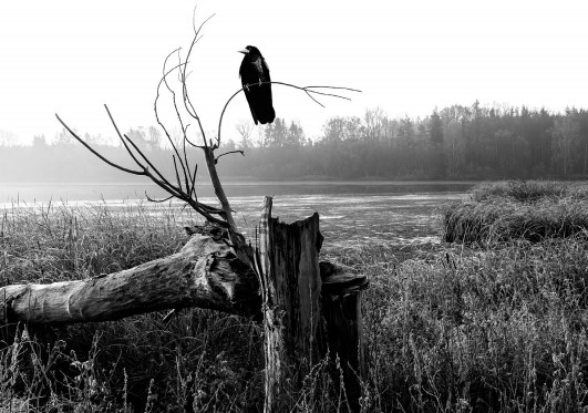 A lonely bird sits on a dead tree next to a wide open field, overlooking a far away forest.