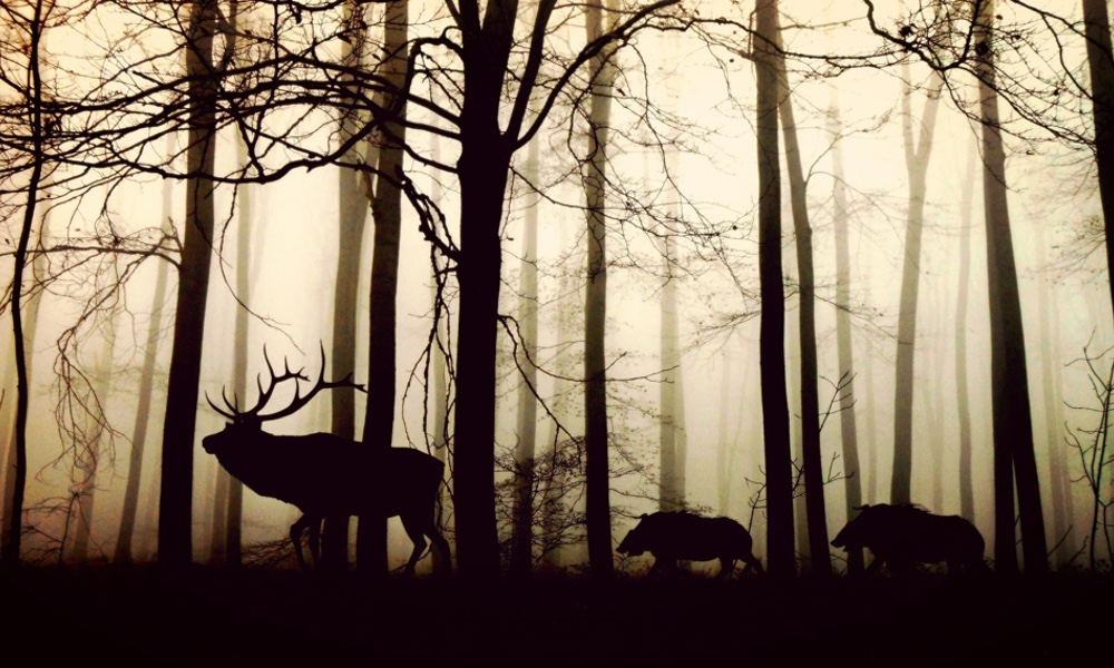 Elk and Boar in Forest