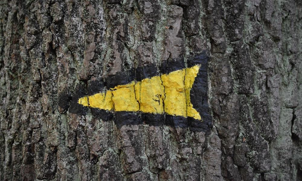Arrow on Tree